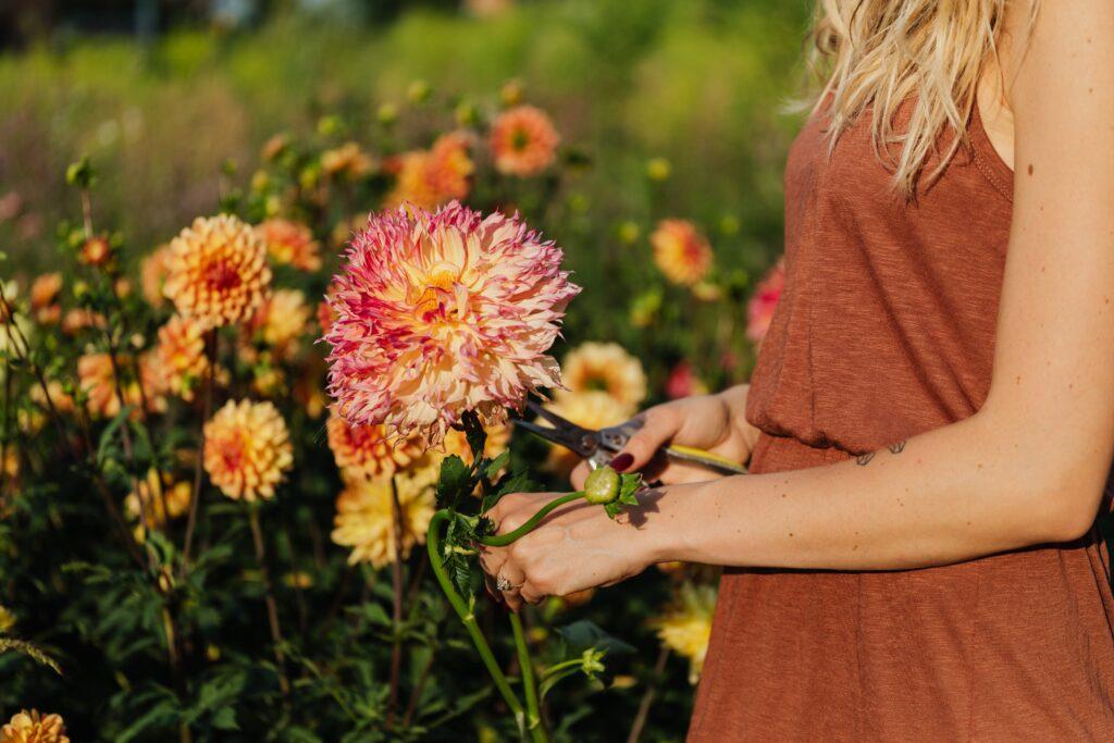 kevadised lillesibulad