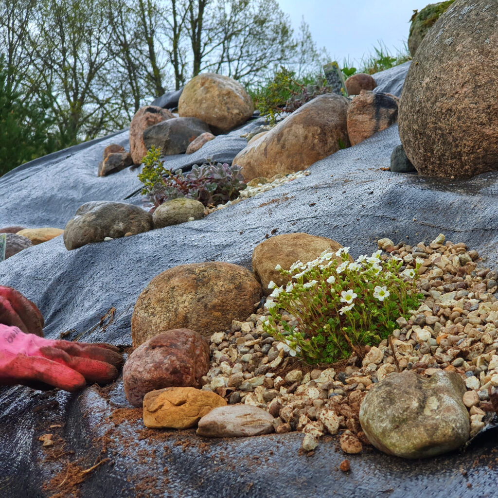 kiviktaimla rajamine