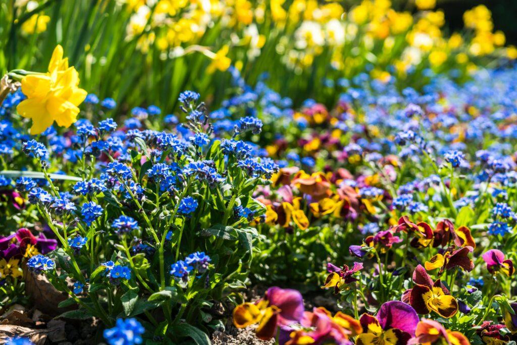 mai aiatoimetused