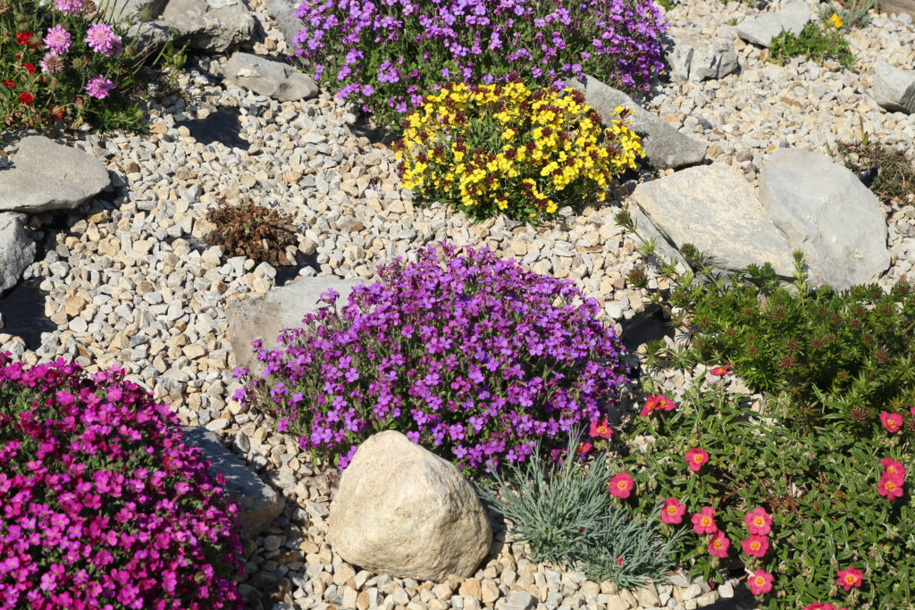 kiviktaimla lilled