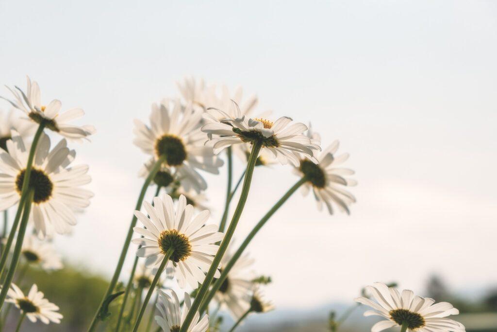 juuni aiatööd