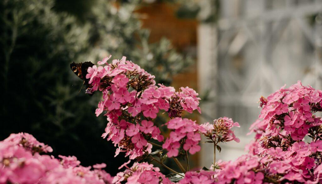 augusti aiatoimetused
